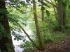 blick-auf-den-waldsee