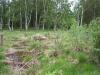 moorlandschaft-birken