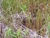 sumpflandschaft