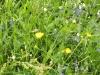 wildblumenmix