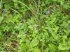 wildpflanzen-im-naturschutzgebiet